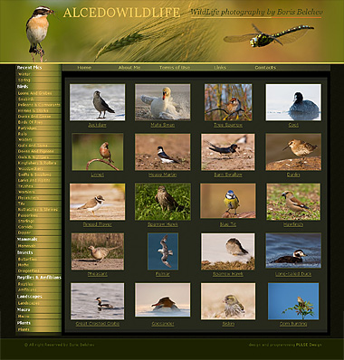 Web design, , WildLife photography by Boris Belchev