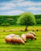 Paintings, Oil on canvas, Sheeps