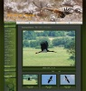 Web design, , WildLife Photos of Mladen Vasilev